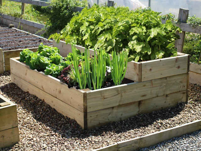 reclaimed scaffold boards used as planters
